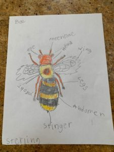 Sterlings bee drawing